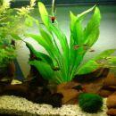 akvariji2