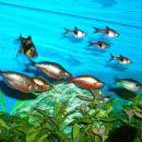 Divjanje po akvariju....