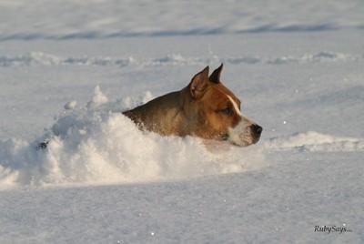 Zimske_ostalo - foto