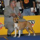 Euro Dog Show Tulln05 - amstafi