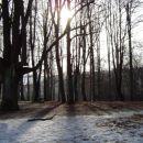 Prelep park v zimskem jutru