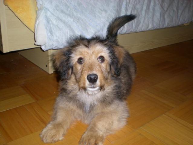 Lan, december 2007 - foto