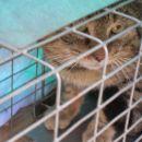 mački podutik - novi del naselja