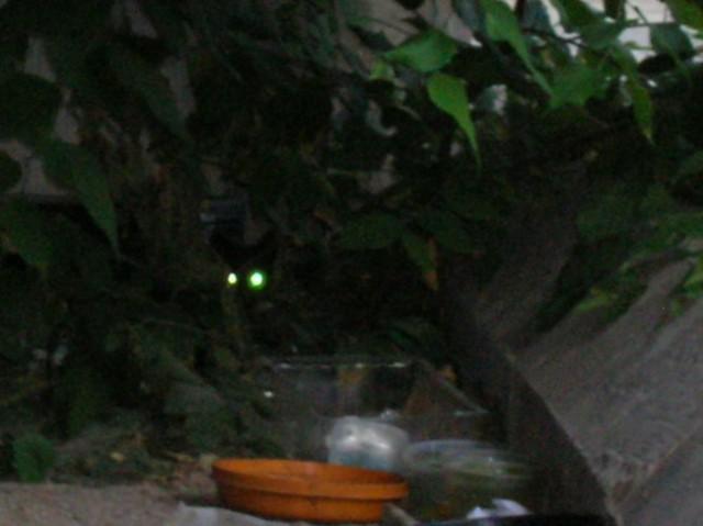 Mački Tivoli - foto