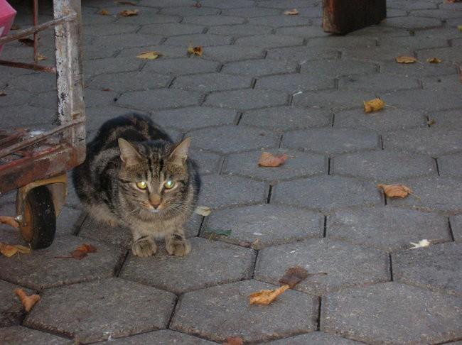 Mački Tivoli - foto povečava