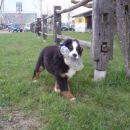 Cody v Ivančni 01.04.08