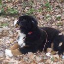 Cody v gozdu 01.04.08