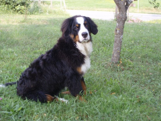 Cody 5-6 mesecev - foto