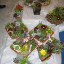 celje flora 2008