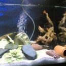 Moj prvi akvarij in zasilna oprema.