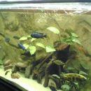 Pogled na akvarij (450l) iz drugega zornega kota