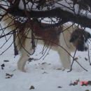 skirvanje za drevesom !! ... zdej me pa nemoraš dobit!!