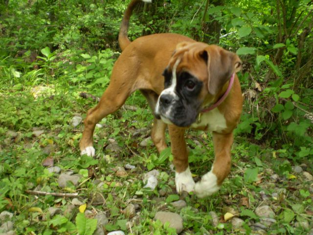 SUMMER  2010 najlepše slikce mojih psov - foto