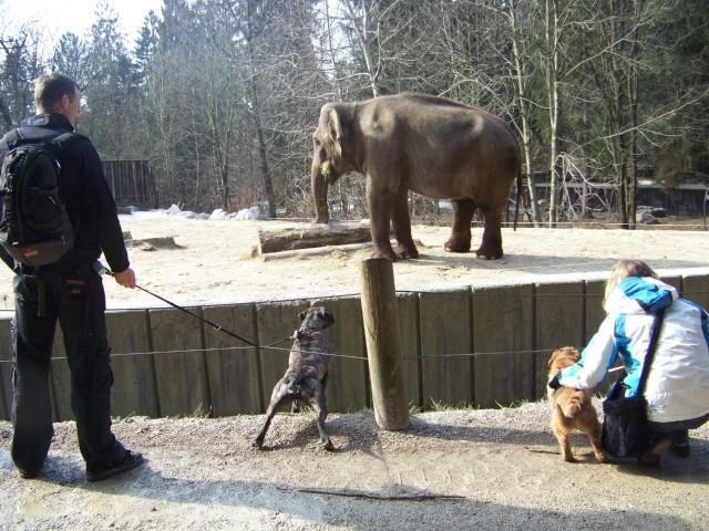Zoo - foto