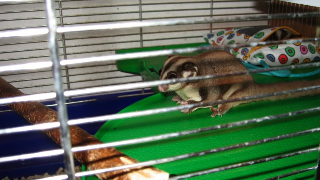 """Poletuši vrečarici: """"Mimi in Miki"""" - foto"""