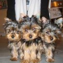 Tori, Trudy in Tara