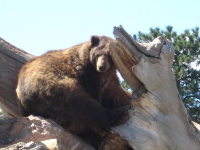 Bear Country - foto