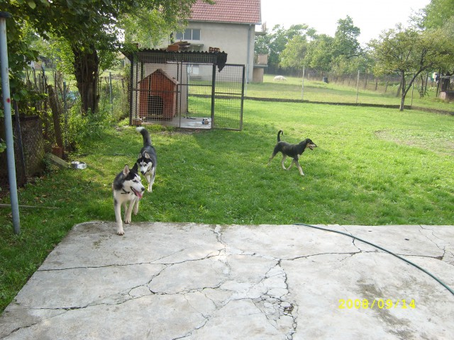 ORION i BALTO - 28.09.2008 - foto