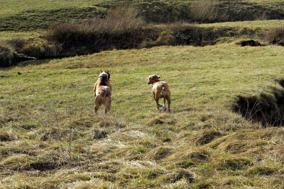 Crt&Šana2009 - foto povečava
