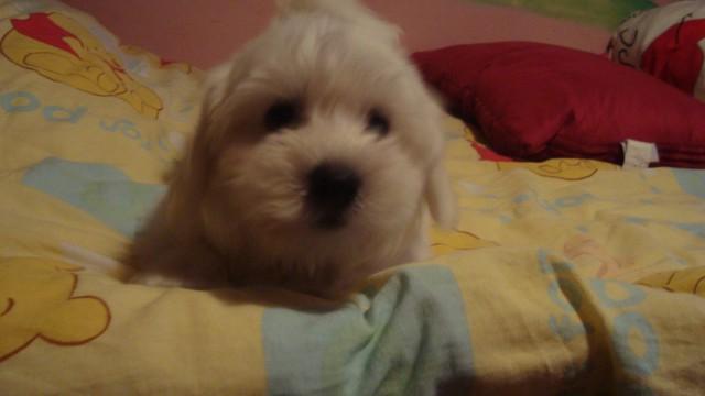 Toby - foto
