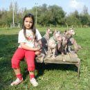 Astrid y perritos