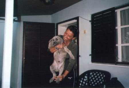 Srpski odbrambeni pas S.O.P. - foto povečava