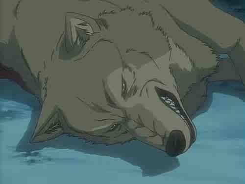 Wolf s rain - foto