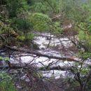 polomljena drevesa