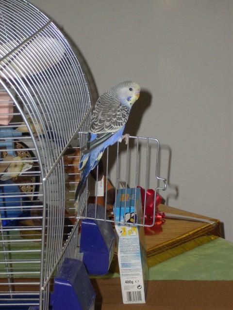 Skobčevka Toki - foto