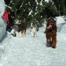 Zima v  Kranjski Gori z Aussiji dec 2005