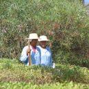 Čistilke v naselju so ves čas skrbele za čistočo.Pokrivala so tipični otoški slamniki.