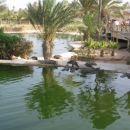 krokodilja farma  (