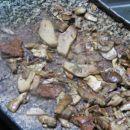 Drotove gobe na kamnitem žaru............mmmmmm