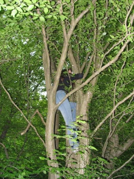 Kam je pripeljala emancipacija Veri?odg.: na drevo.