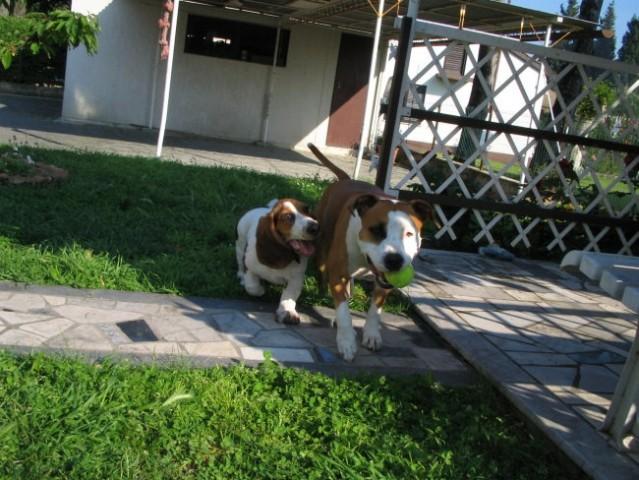 Frendica Biba aka Berta  - foto