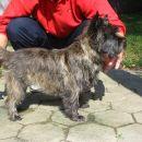 Puma Dobart cairn terrier