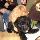 Beyla&Buster