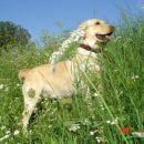 veselje na travniku