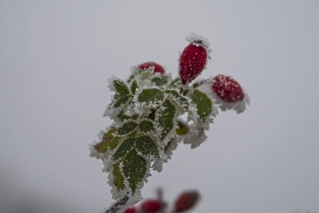 21. december 16 - foto