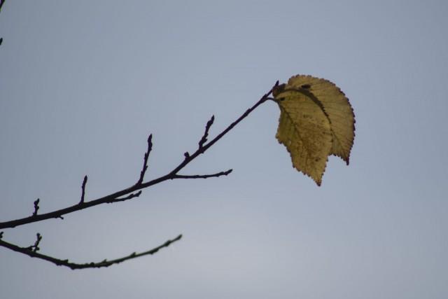 25. oktober 18 - foto