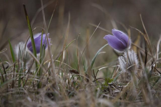 11. marec 19 - foto