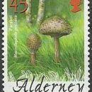 Alderney 29.01.2004