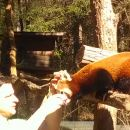 Filip-zoo-rd