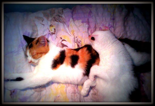 My two kittys - sansa&arya