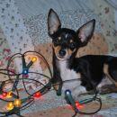 MAXI prvi božič