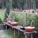 bonsai - 05.04.2012