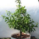 bonsai - 03.05.2012