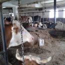krave in biki