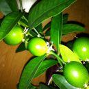 moje rastlinice