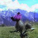 Kranjska Gora ( z Vitranca )